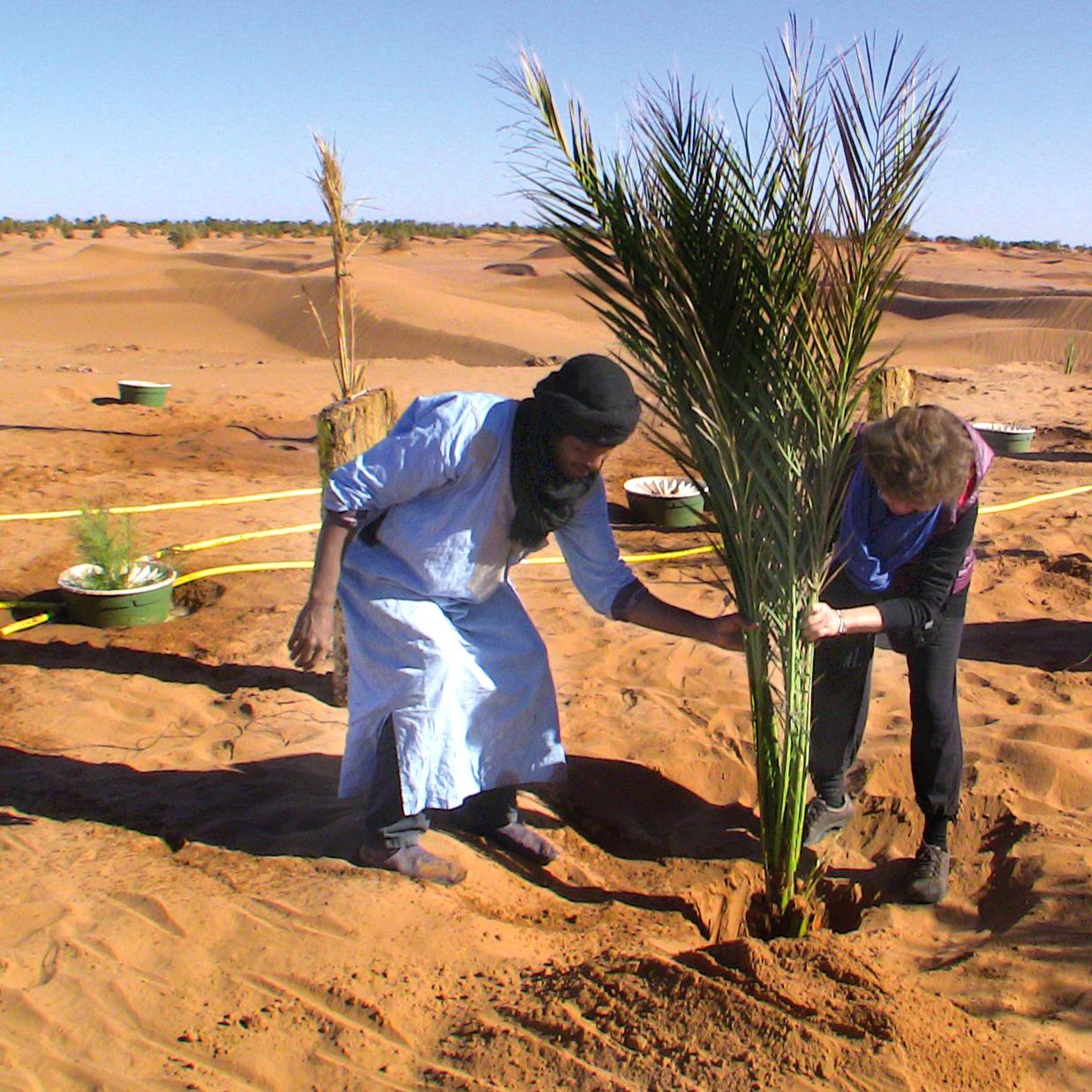 SRF_planting-palm
