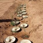 Sahara-Roots News Update July 2017